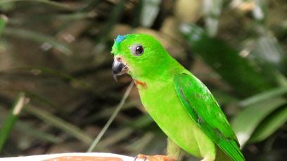 SINGAPORE: Colourful birdie in the Singapore Zoo. Shine bright little man.
