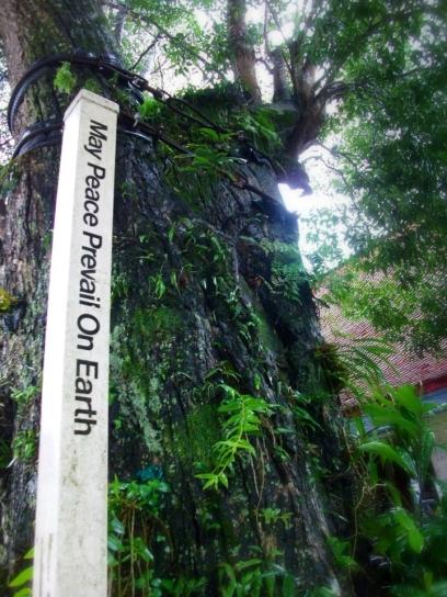 THAILAND: We agree! Doi Suthep Temple, Chiang Mai.