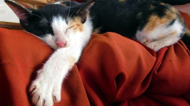 CAMBODIA: We couldn't get enough of the kittehs. We are totally accepting our crazy cat lady future.