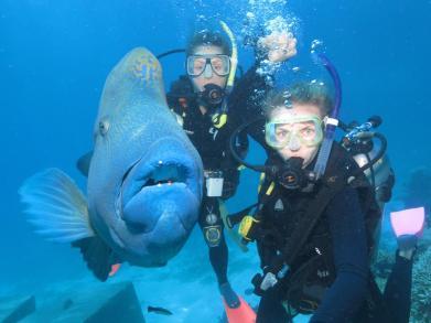 AUSTRALIA: This is Nigel, a Maori Wrasse. He's a big old boy!
