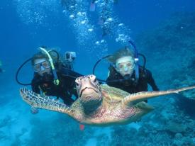 AUSTRALIA: Swimming with turtles on the Great Barrier Reef in Cairns. Couldn't have posed better!