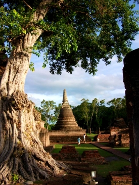 THAILAND: Pagoda in Sukhothai Historical Park. That tree looks pretty old.